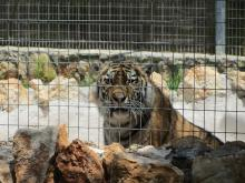 Pafos Zoo