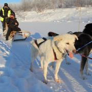 Husky Sleding in Kirkenes, Norway