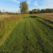 Mown lawn trail