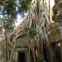 Angkor Wat - Ta Prohm Temple