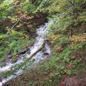 Bill's creek